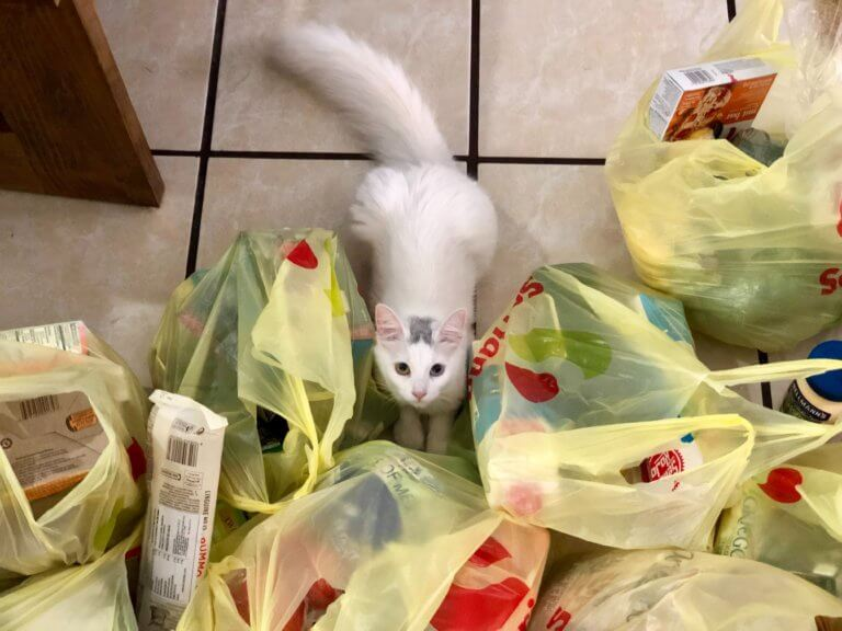 cat_around_plastic_bags.jpeg