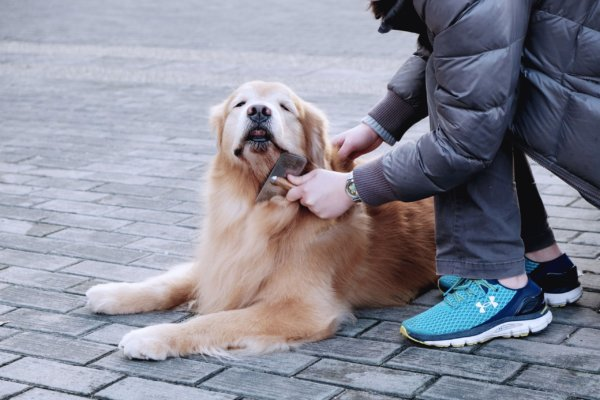 owner_brushing_golden_retriever.jpeg