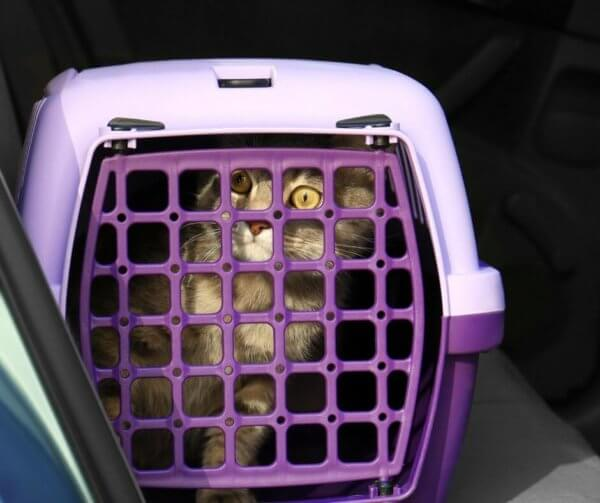 cat_in_plastic_carrier.jpeg