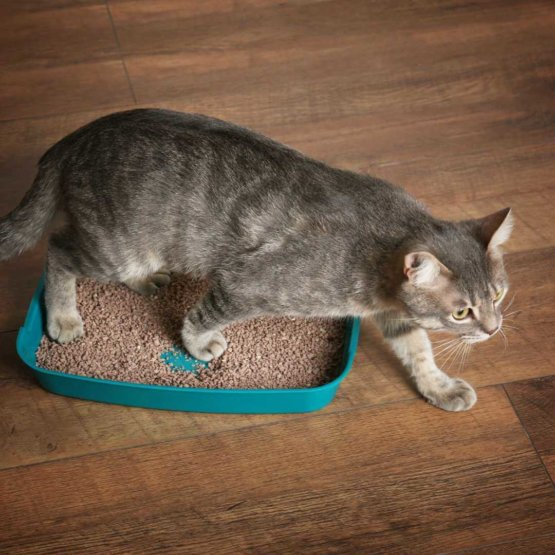 cat_crossing_litter_box.jpeg