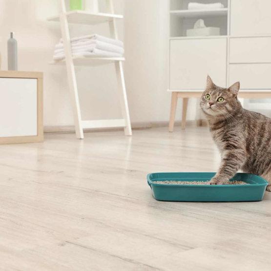 cat_standing_in_litter_box.jpeg