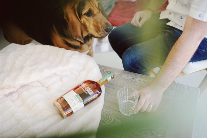 dog_beside_bottle_of_alcohol.jpeg