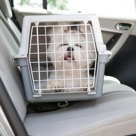 plastic_dog_crate_on_car_seat.jpeg