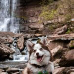 pomsky_dog_in_nature.jpeg