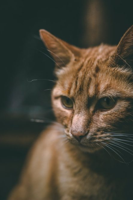 Why Do Cats Eat Ants?